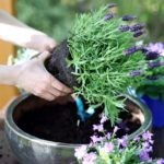 Pomysły na aranżację ogrodów